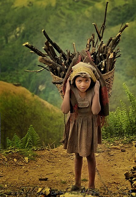 Nepali child collecting wood for cooking food